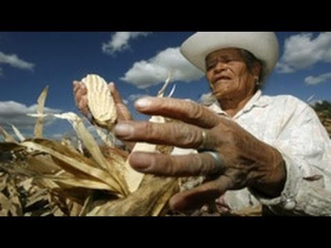 NAFTA + U.S. Farm Subsidies Devastates Mexican Agriculture