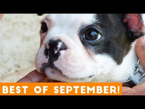 Ultimate Animal Reactions & Bloopers of September 2018   Funny Pet Videos