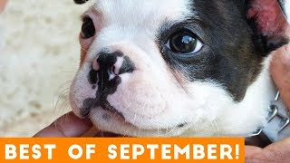 Download Ultimate Animal Reactions & Bloopers of September  2018 | Funny Pet Videos Mp3 and Videos