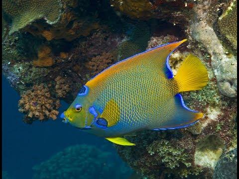 Cozumel Reefs - [ Ultra HD 4K ]