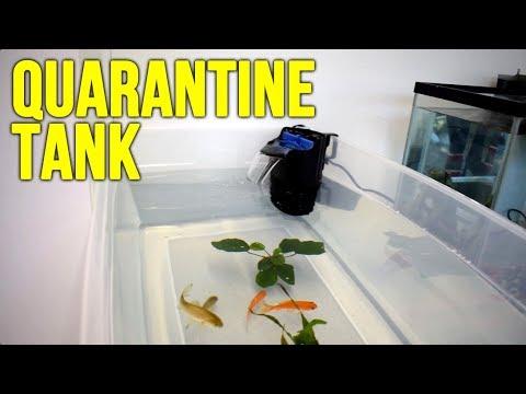 New Plastic Bin Aquarium And Fish!