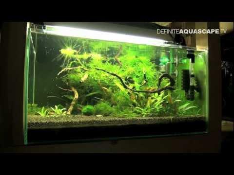 Aquarium Ideas - Planted Tank 60x40x30 No 1 (Hummel Shrimps)