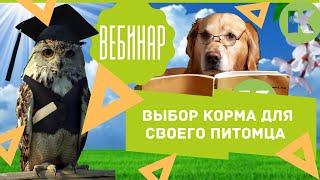 """Вебинар. Обзор рынка кормов для животных. Выбор корма для своего питомца. Ветклиника """"Котонай"""""""