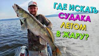 ГДЕ ИСКАТЬ СУДАКА ЛЕТОМ КОГДА ЦВЕТЕТ ВОДА ЛОВЛЯ СУДАКА В ЖАРУ НА ДЖИГ Рыбалка на судака 2021