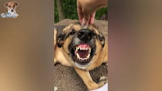 I Found Some of The Most Funny Pets on Internet Just For You 😍 Cats & Dogs