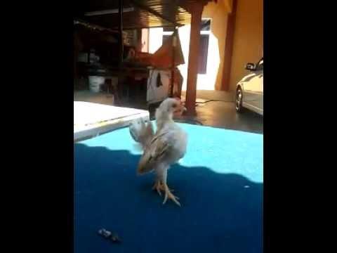 video - 2012-01-06-11-56-27_-1179978023_clip.mp4