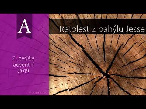 Homilie na 2. neděli adventní (A) – Ratolest z pahýlu Jesse