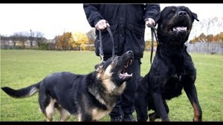 今回の主なテーマ : イギリスBBCの調べによると、警察犬が無実の一般人...