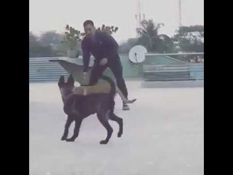 MS Dhoni Playing With Dogs !