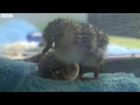 Conservation heartbreak for endangered bird   BBC News