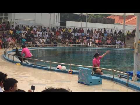 Pink Dolphin Show in Underwater World at Sentosa Island - Singapore
