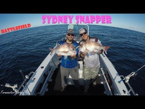 Sydney Snapper