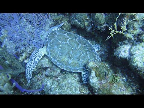 Scuba Diving Ledge at Grand Turk