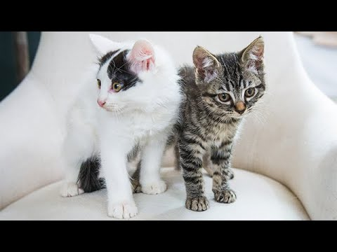 Adoption Ever After - Puppies and Kittens - Home  & Family