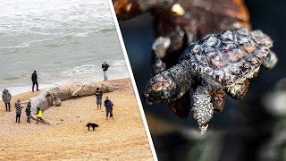 Страшная экологическая катастрофа в Израиле: из-за утечки нефти массово гибнут животные