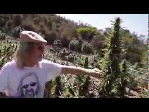 Jorge Cervantes VARIETIES   Kush, Mr Nice, Blackberry From Lake County Outdoor)