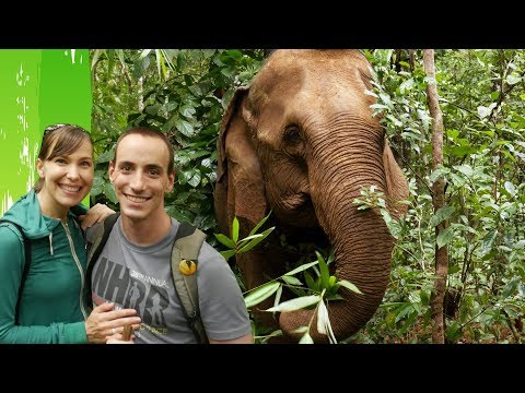 HIKING WITH ELEPHANTS (ETHICALLY)!: Elephant Valley Project, Cambodia!