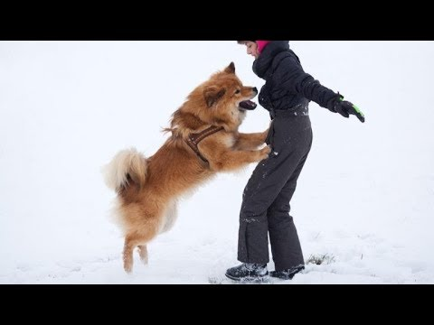 How Do You Stop a Puppy Jumping Up: Get Free Dog Training