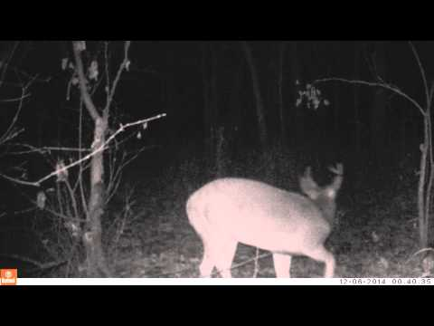 Deer Hunter Problems - Day time versus Night time trail camera footage
