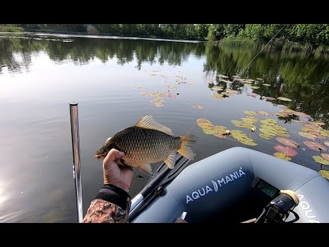 Ловлю огромных карасей с лодки в зарослях белых лилий.  Рыбалка на поплавок в стиле лайт..
