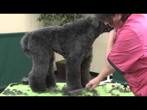 Dog Grooming - Fix-It-Tips Using a Kerry Blue Terrier