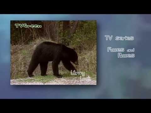 FaunaView: Yellowstone - Black Bear Landscape