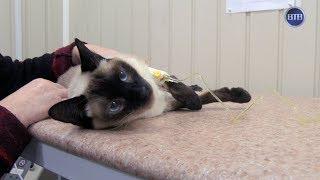 ВТВ - Лечение домашних животных