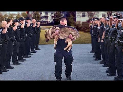 Так Хоронят Полицейских Собак в Америке. Жизнь и Служба Собак в Полиции