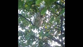 кот-акробат на дереве