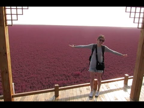Liaoning Province Vlog: Red Seabeach & Panjin!