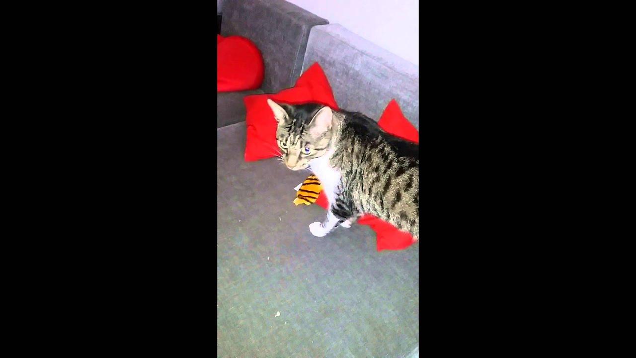 Weihnachtsgeschenke Katzen - YouTube