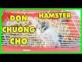 MỀU DỌN CHUỒNG CHO CHUỘT HAMSTER 2 TUẦN TUỔI*CÁCH ĐỂ TẮM CHO HAMSTER CON*CLEANING HAMSTER CAGE