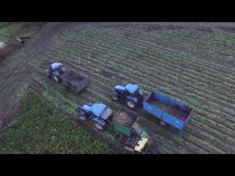Bit of beet - DJI Phantom
