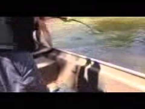 80-100lbs Lake Sturgeon caught in white river east