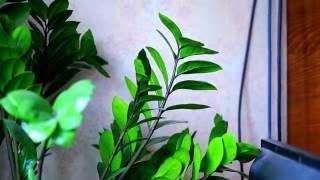 Красивые декоративные комнатные растения
