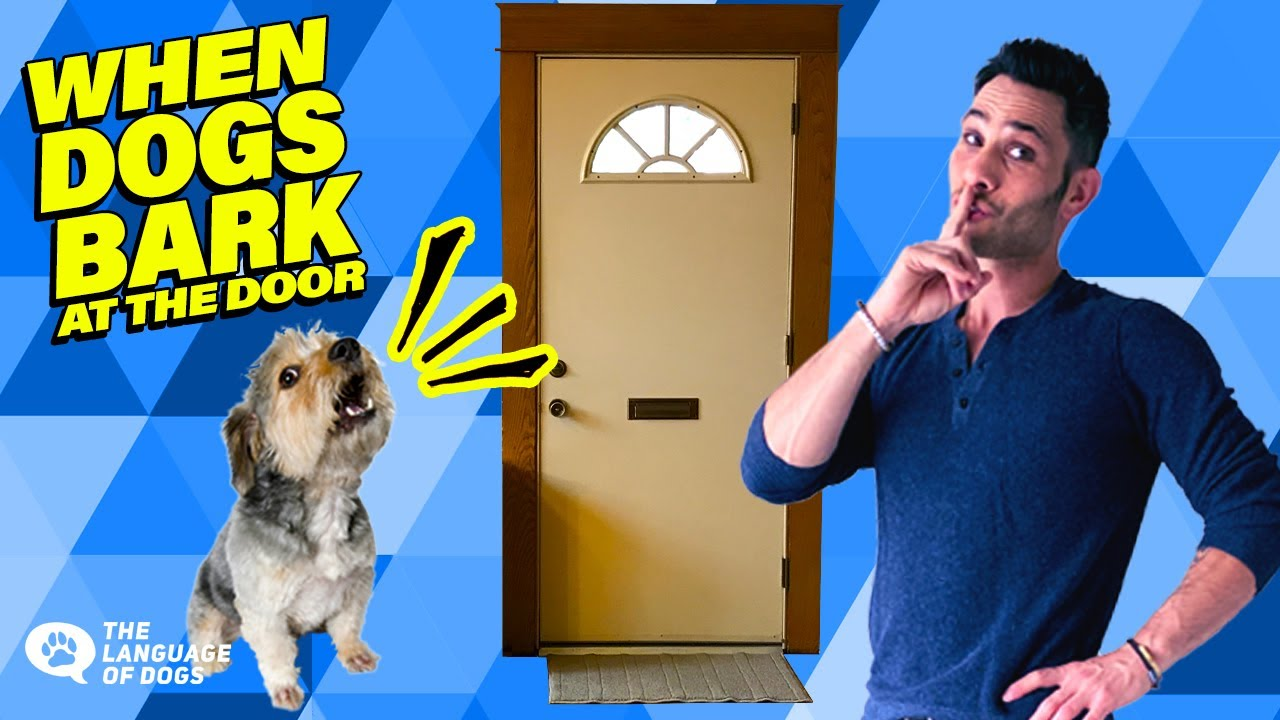 BARKING AT THE DOOR SOLVED W/ DOG EXPERT,  JUSTIN SILVER / TUTORIAL