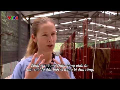 VTV4 Expat Living: Annemarie - Patron Saint of the Bears