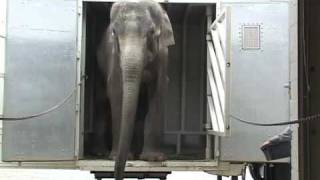 The Elephant Sanctuary | Ned's Arrival