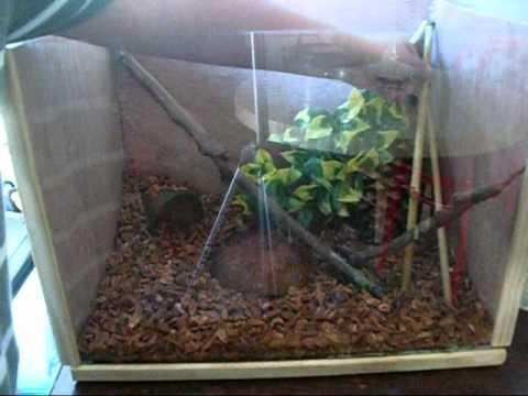 Green Anole Tank