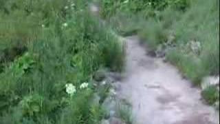 Wild Beaver at Maroon Bells, Colorado 2004