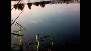 Рыбалка Гомель часть1