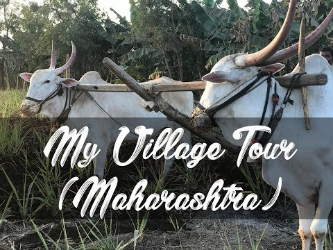 Life in a Village in INDIA - Maharashtra - Solapur Village Tour