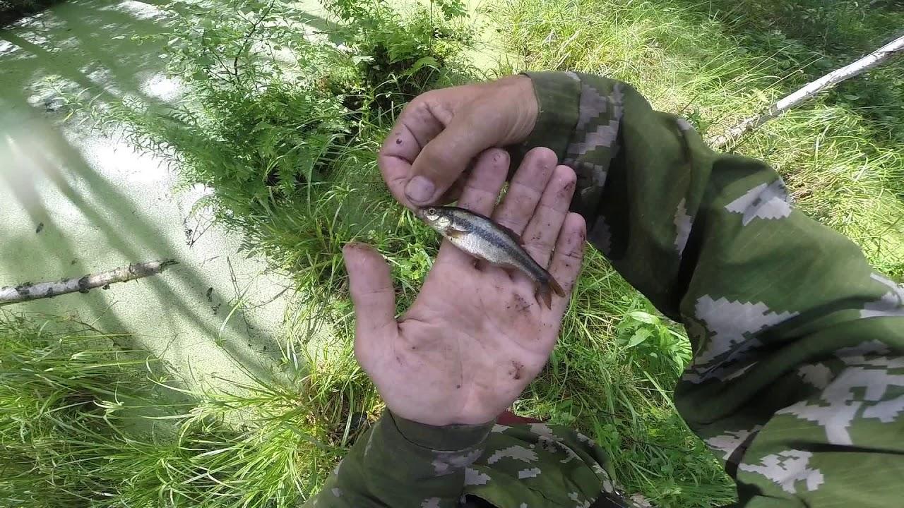 Ловля рыбы на болоте мякушки, видео rybachil.ru