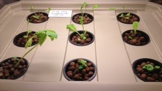 Hydroponic Experiment 01
