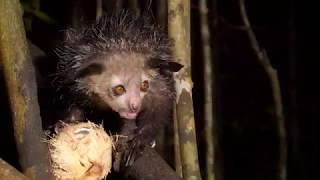 Madagaskar - Insel der Lemuren und Chamäleons, Trailer