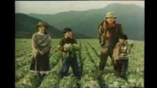 1981 エスエス製薬 ネーブル 浜畑賢吉 上村香子 1981 シャープ ミスター...