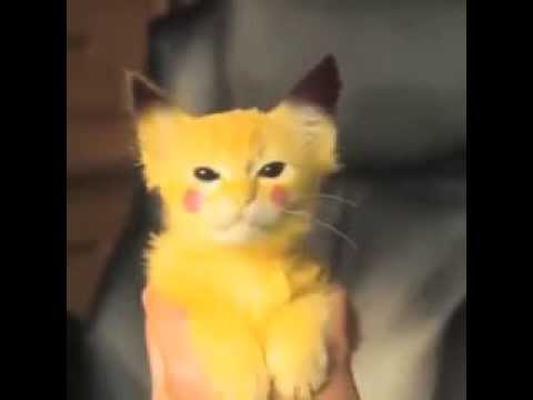приколы котенок