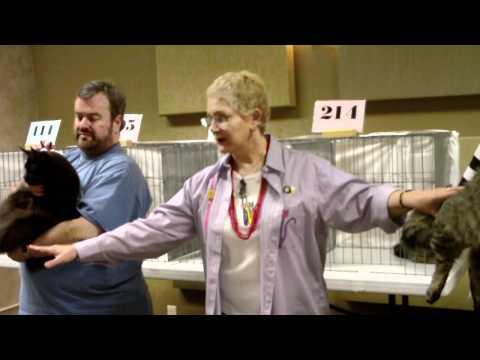 The Evergreen Cat Fanciers, Ferndale, WA, February 12-13, 2011, Judge Aline Garel Noel