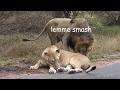 BEST OF LEMME SMASH VIDEOS (Compilation) #7 [FINAL?]