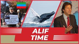 Огромный кит в Турции Дело Гасангусеновых жалоба поддержана Пакистан против сжигания мусульман
